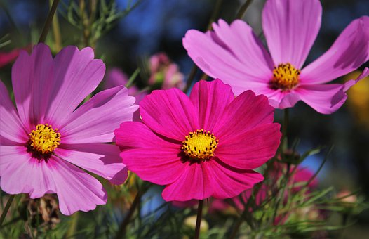 Good morning everyone! Wishing you all a happy, wonderful Wednesday! Mid-week already!              💛🌻💛🌻💛🌻💛🌻💛🌻💛🌻
