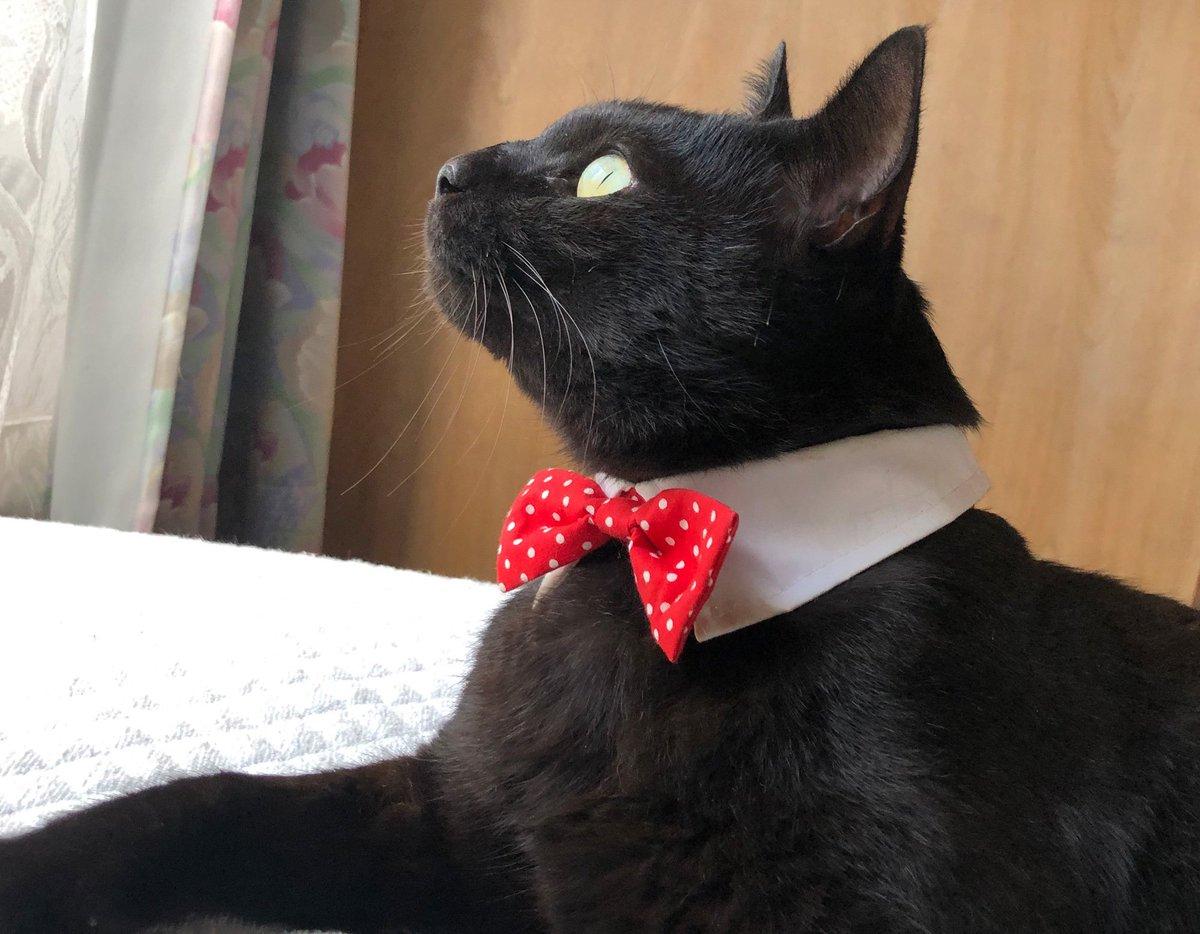 ブログ更新しました〜付け襟を装着したジェントルマンな姿をお披露目。そして紳士にあるまじきものまで意図せずお披露目しています。