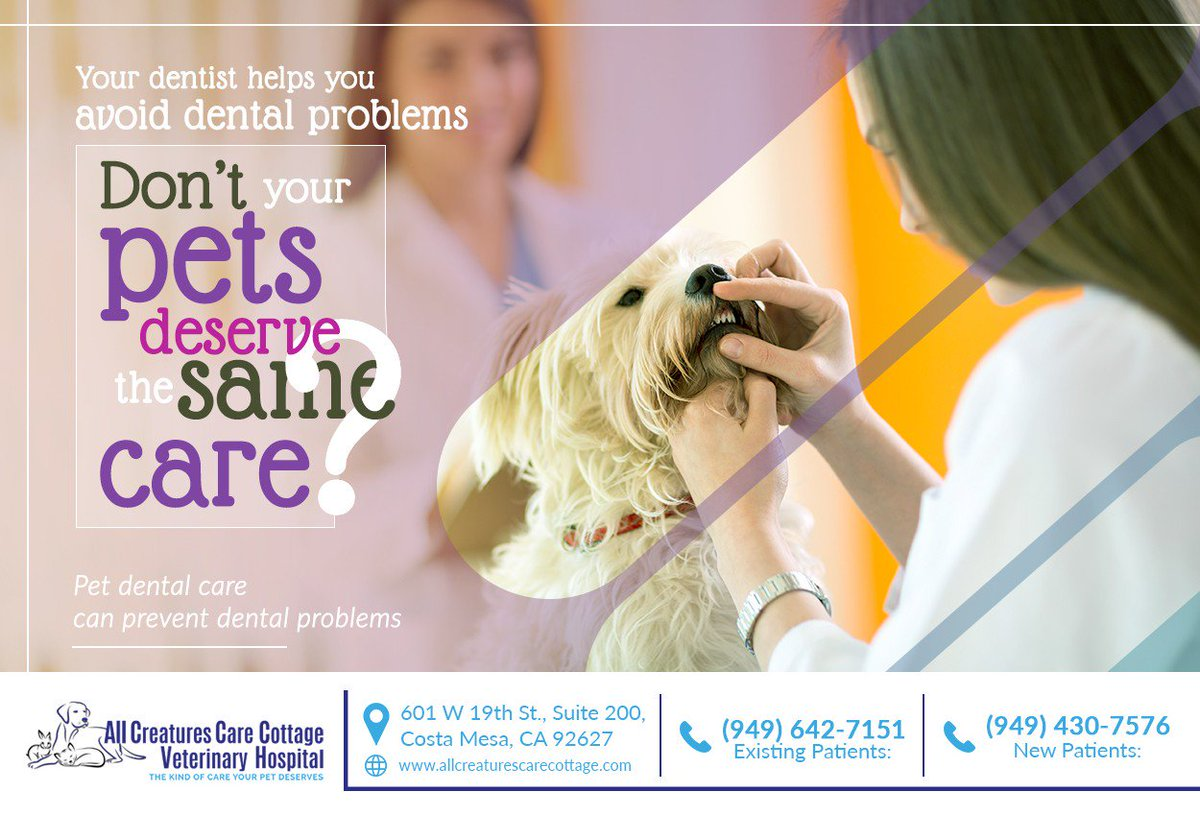 You take care of your teeth to avoid dental problems, why not do the same for your pets? Call (949) 430-7576 to set up a dental checkup for your pet today. #petdental #costamesa #CA #allcreaturescarecottage
