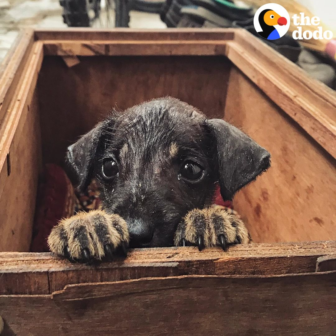 This puppys waiting in India for the perfect family to fall in love and fly him home!