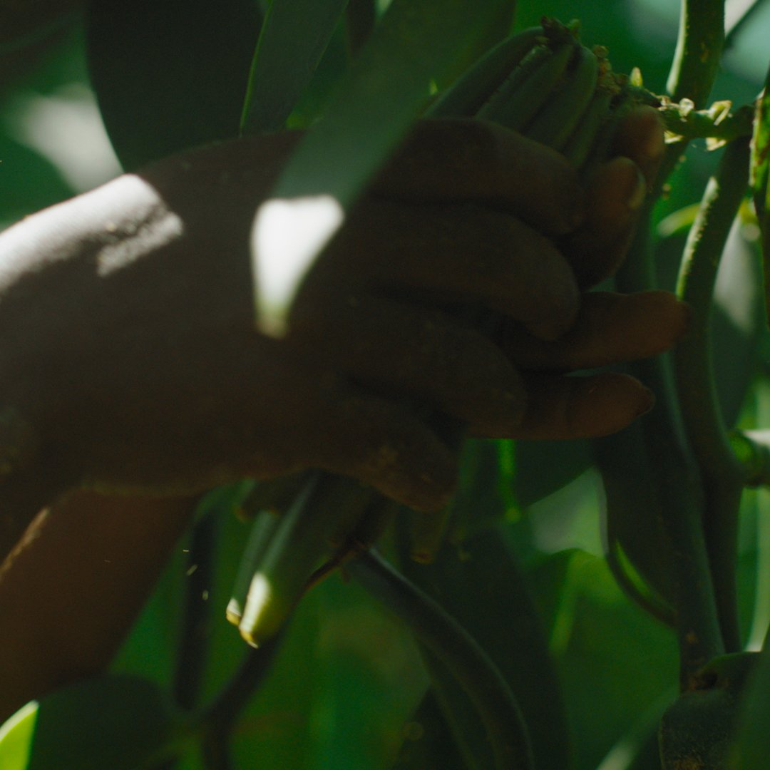 Follow the unique creation process of CHANEL skincare from nature to the jar. BEYOND THE JAR, episode 1: Vanilla planifolia.#CHANELSkincare #BEYONDTHEJARFind out more on http://chanel.com/-BTJ19