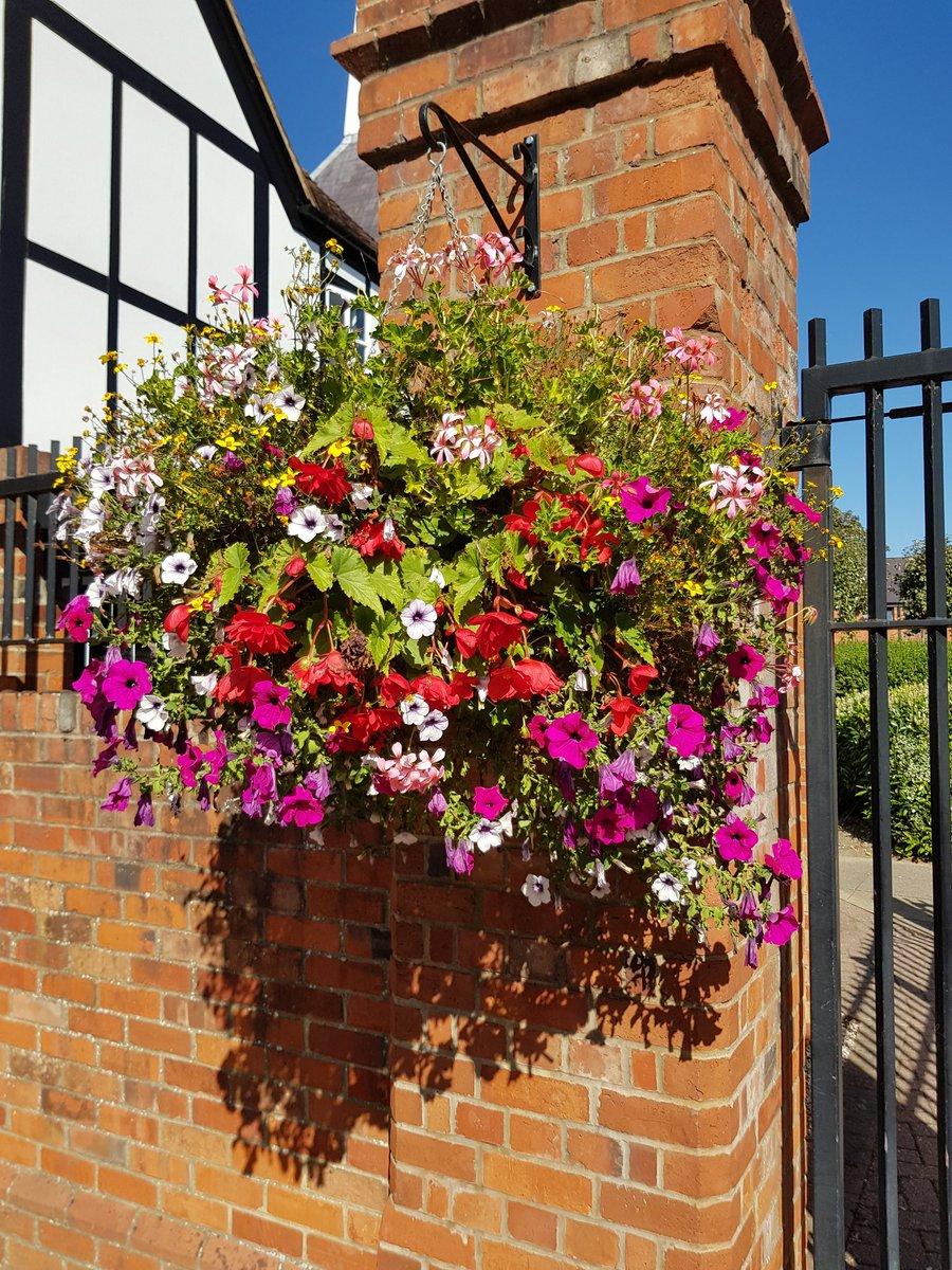 WindowflowersUK photo