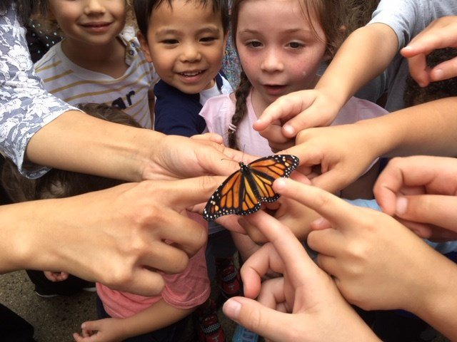 test Twitter Media - Did you know that you can tag and track monarch butterflies? The students at @SJSBrookfield did just that during their recent release and are now able to track them on their annual migration to Mexico! #wednesday #Butterflies @Diobpt @BptSup https://t.co/sR3kBXlyLW