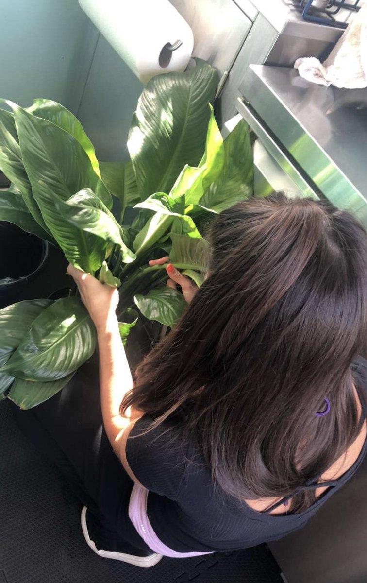 Got my girl a pretty house plant 🥰