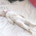 「行く前から既に帰りたい…」画像の猫ちゃんがかわいすぎてみてしまいました