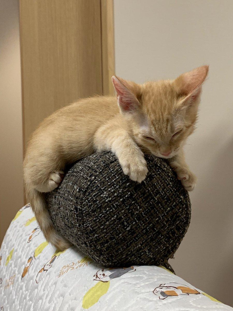 🎼🎵·*☆🎙·*☆🎹.*☆🎶.☆*·.🎙 ·☆*引っ越ししてから1ヶ月ちょっと経ちました😁その時に拾った子猫は毎日ユチョンの曲を聴いて大きくやんちゃ娘に育っていますWw𐤔ʷ 🤣ّ  ʷ𐤔wW#slowdance#ユチョン