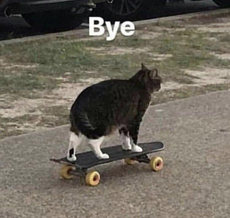 """reaction pics 💯 & more! on Twitter: """"Bye skateboard cat… """""""