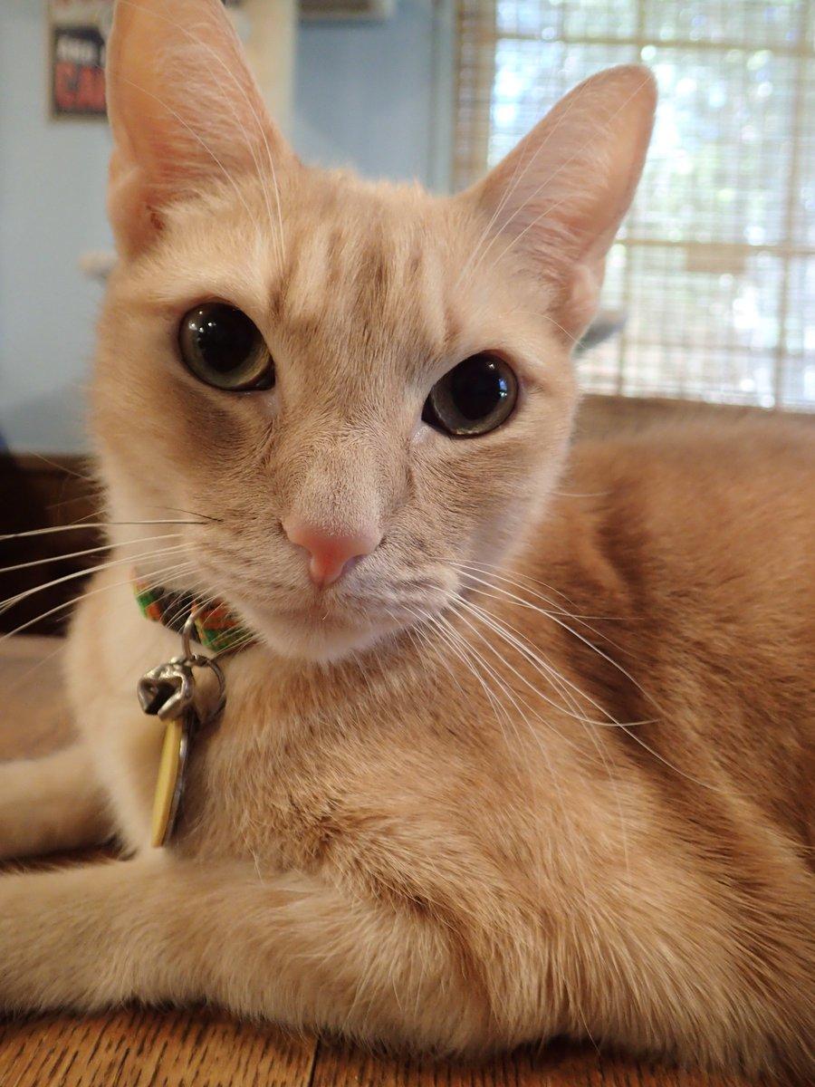 #whiskerswednesday https://lonestarcats.blogspot.com/2019/09/wordless-wednesday_18.html…