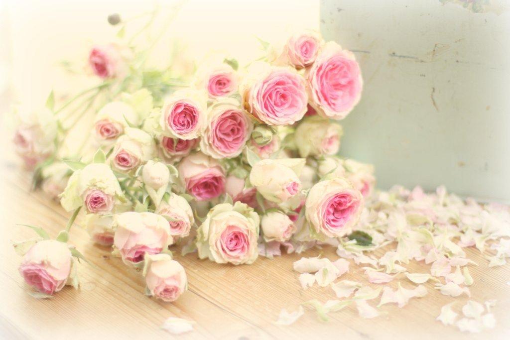 Оксана с днем рождения картинки красивые цветы, красивые картинки