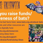 Image for the Tweet beginning: Bats aren't scary in fact