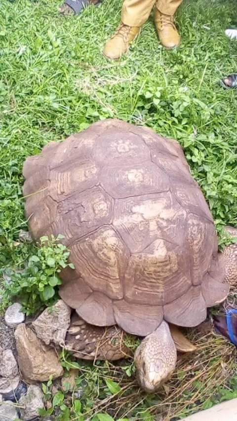 Does this photo really show a 344-year-old tortoise?