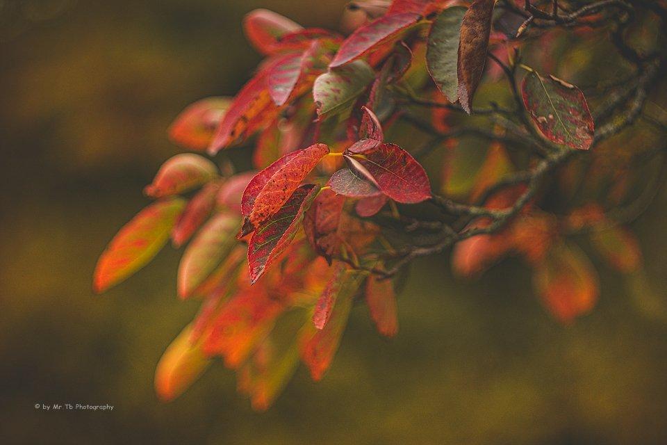 Guten Morgen #kiel   #autumn #nature #photography #carlzeiss #pancolar #lightroom #50mm #germany #outdoor #bokehlicious
