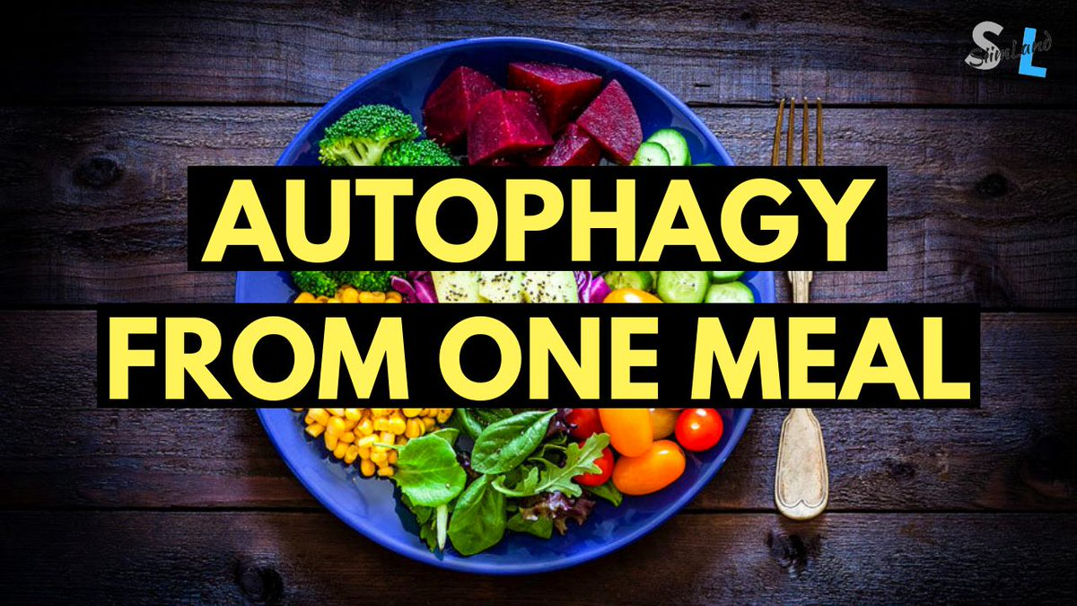 Siim Land A Twitter Do You Get Autophagy Eating One Meal A Day Check Out This Video About Omad And Autophagy Https T Co Feo2sw0shy Keto Ketodiet Intermittentfasting Fasting Biohacking Omad Autophagy Health Antiaging Longevity
