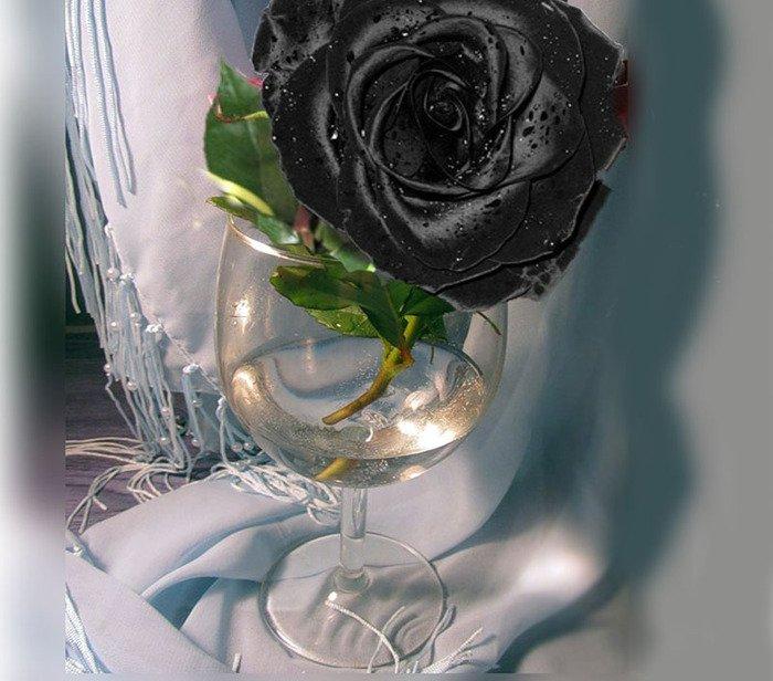 Розы в фужере картинки