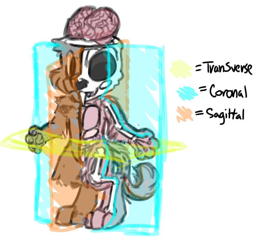 Animal Jam Aj Art Drawings