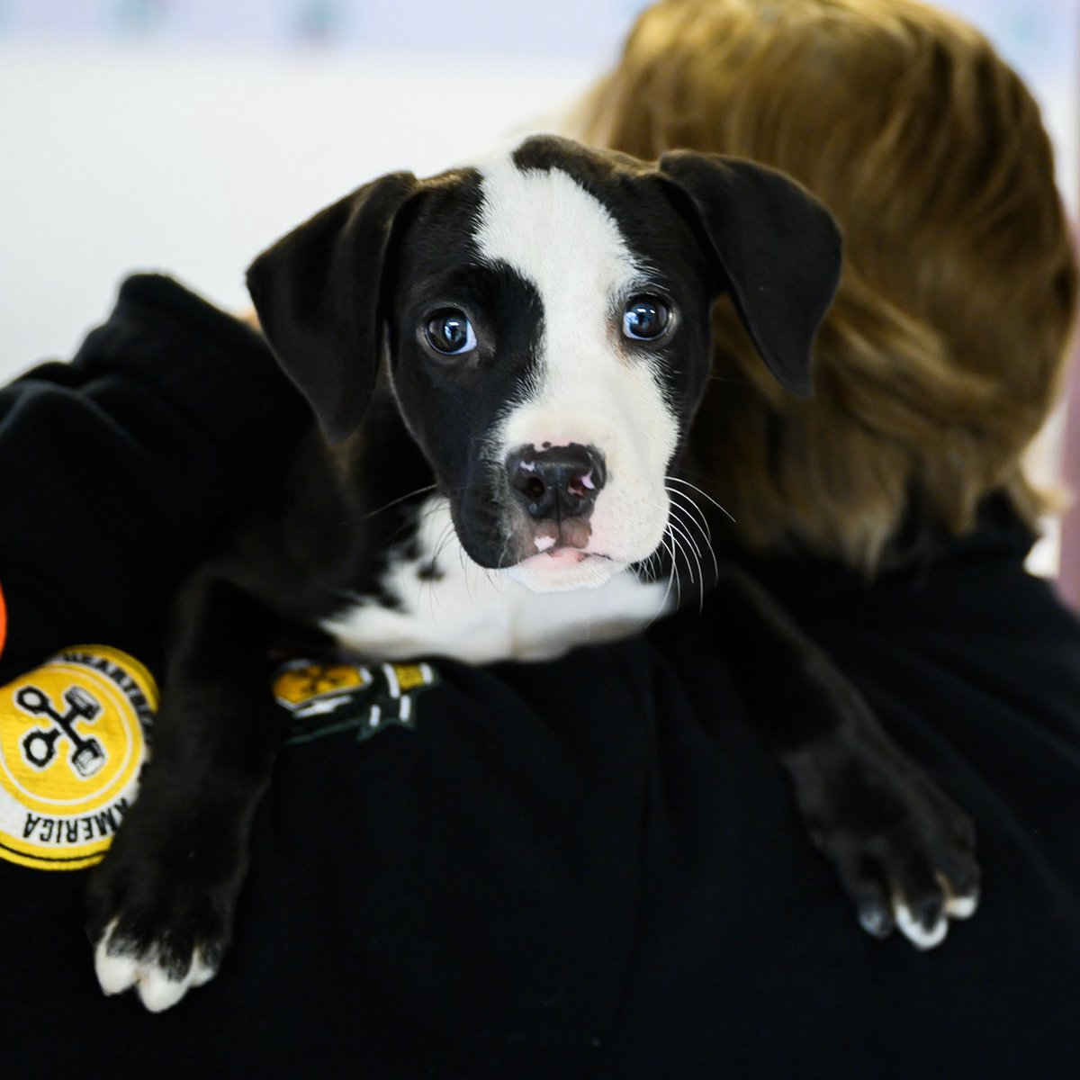 """ADOPTABLE: Parker, Hound mix (3 m/o) - via @allbreedrescuvt, VT """"He's the last of his litter."""" #rescuemonth"""