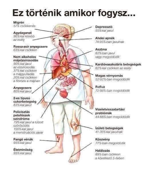fogyás bfs)