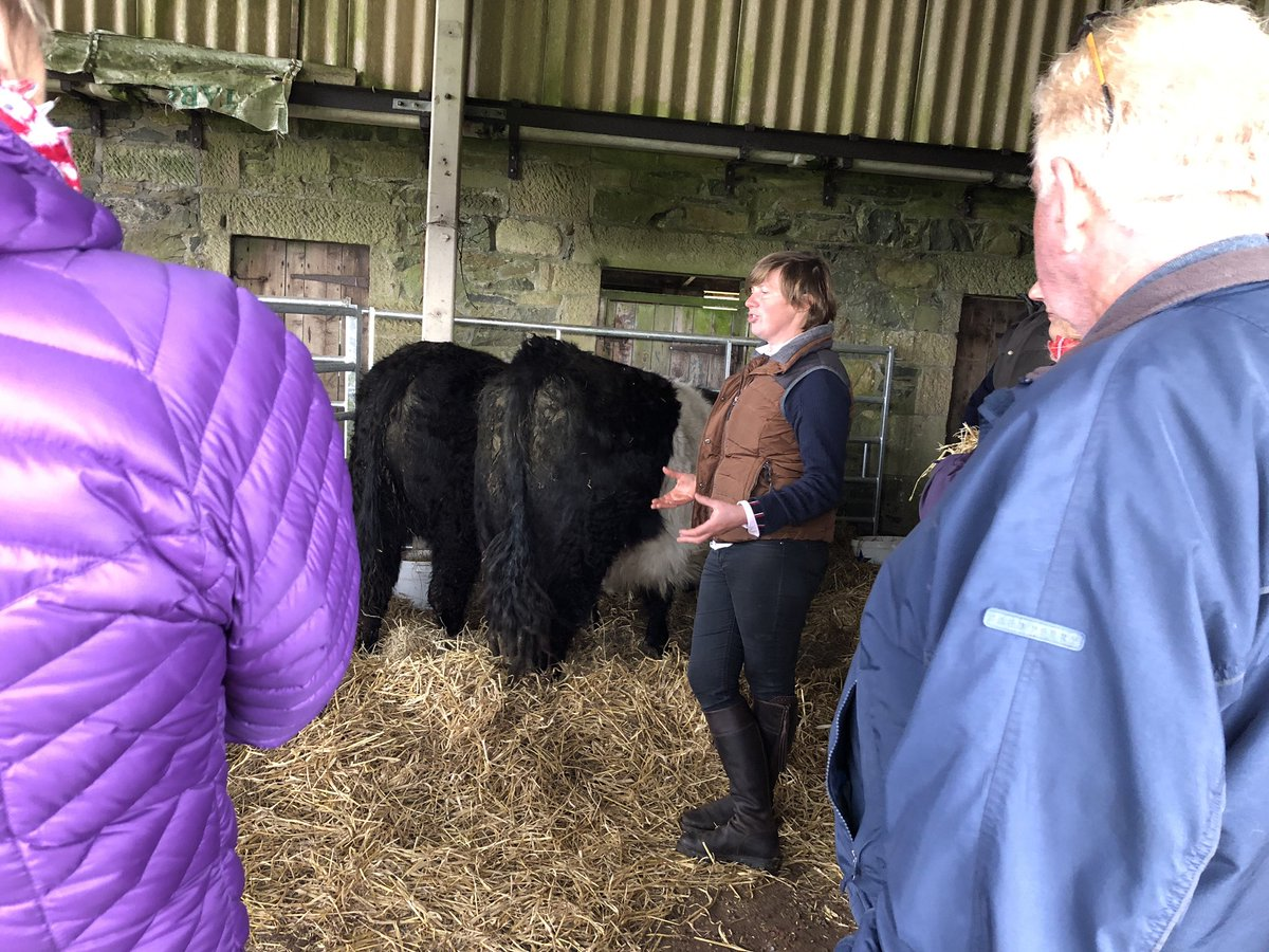 Stubborn attitude, now is that the Belties or Helen 😉 Quote from Helens partner, Chris. #OnlyJoking