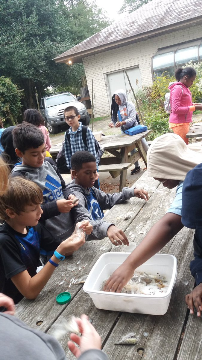 Franklin middle school students separating milkweed seeds for replanting. @BCPSSci @FMS_BCPS
