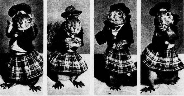 "Did you that it is Squirrel Awareness & Appreciation Month? Celebrate one of the more endearing members of the rodent family in our historical newspapers. Here's Rupert, ""The Scotsman, from 1950. chroniclingamerica.loc.gov/lccn/sn8304546… #ChronAm"