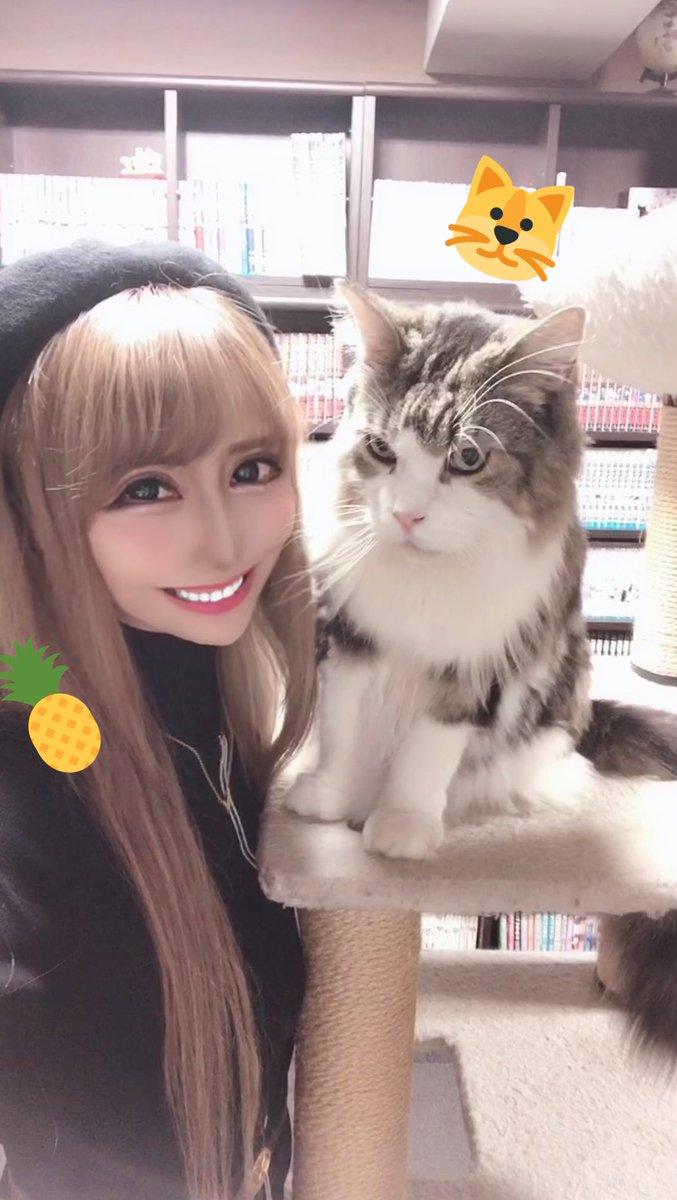とぅるるん🐱❤️ #ねこ #猫カフェ #きゃりこ #新宿 #かわいい