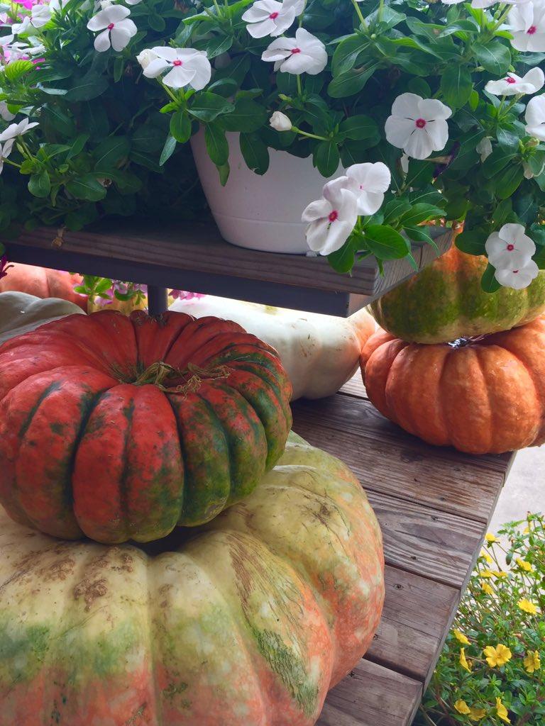 Fall + Christ Orchard =  #shoplocal <br>http://pic.twitter.com/LVXs7WslTz