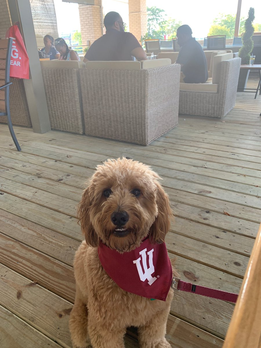 Allie is out on the town after enjoying the @IndianaFootball W @IUBloomington @IUHoosiers @IUAA