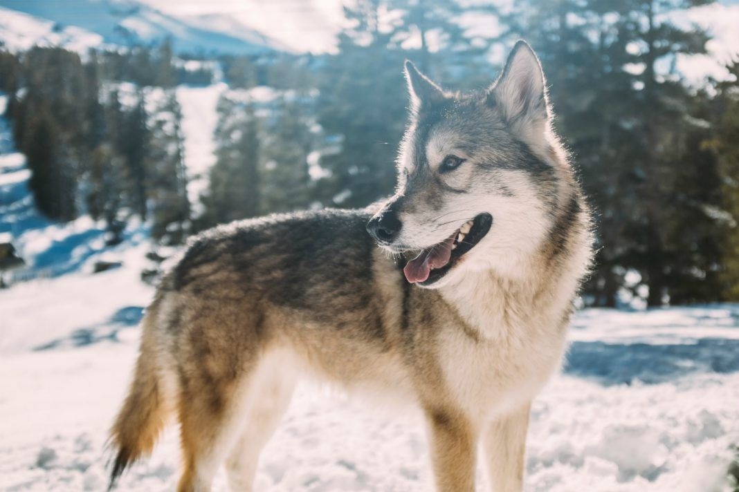 What I learned about relationships from hanging out with wolves buff.ly/2NlLvrl