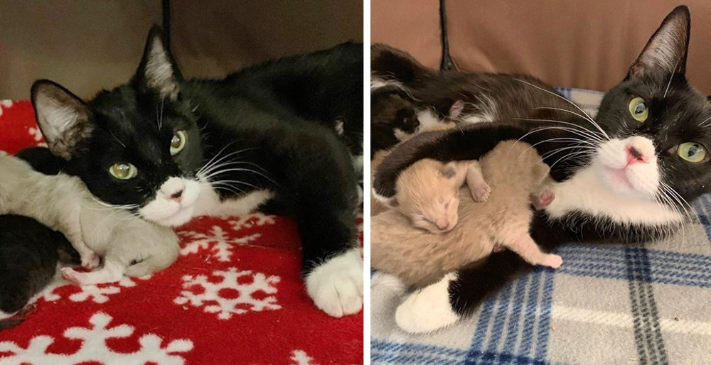 Stray cat came to a family for help - when rescue arrived, they found a tiny kitten by her side. See full story and updates: lovemeow.com/stray-cat-fami…