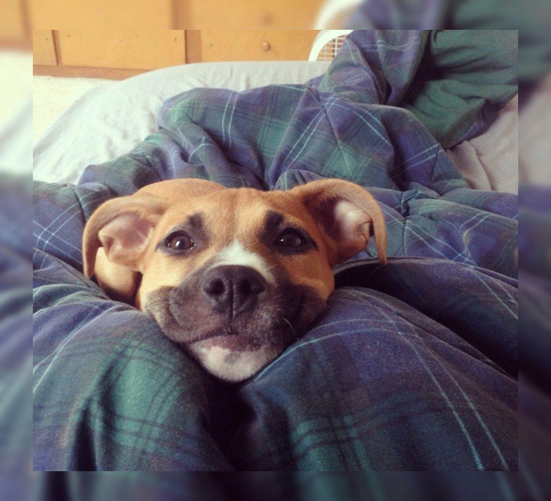 Картинки доброе утро с прикольными собаками, картинках мультяшных