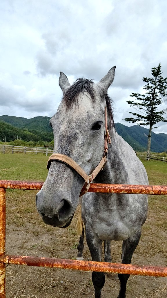 お気付きの方もいらっしゃるかもしれませんが、、、2018年福島牝馬Sの1、2着馬に会うことができました😄共に受胎し、今度は母になり、産駒の対決が楽しみですね✨ 福島牝馬S1着 #キンショーユキヒメ (ハービンジャー) 福島牝馬S2着 #カワキタエンカ (ルーラーシップ) #牧場巡り2019 #福島牝馬S