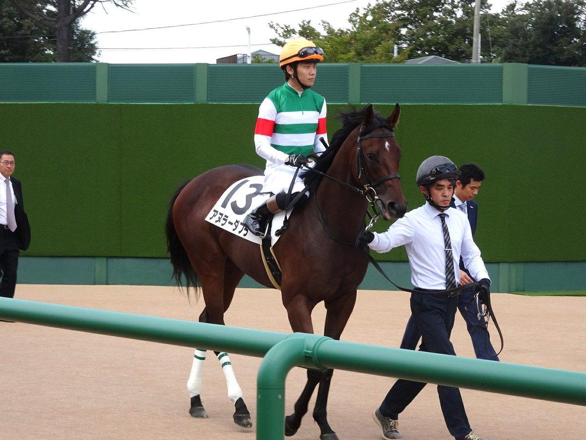 中山5レース「2歳新馬」(芝1600m) 勝利したのは、キングカメハメハ産駒アヌラーダプラ(牡2) #アヌラーダプラ #三浦皇成 #2歳新馬 #中山競馬場 #JRA #日本中央競馬会