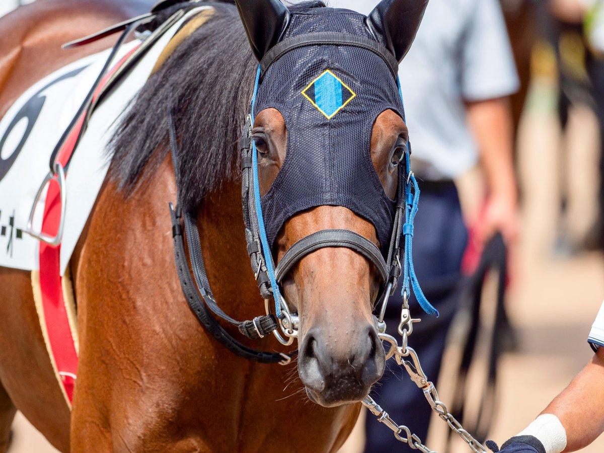 2019.9.22 中山5R 2歳新馬 テイエムトニーオー 2017年世代はじめてのテイエムオペラオー産駒。彼は5月生まれということで、まだまだあどけない感じだった。