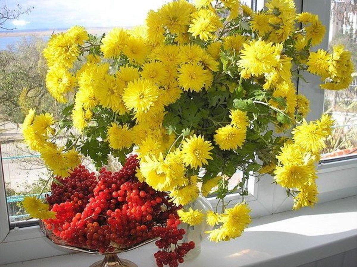 Открытка доброе утро с хризантемами, картинки