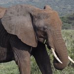 Image for the Tweet beginning: Happy Elephant Appreciation Day!