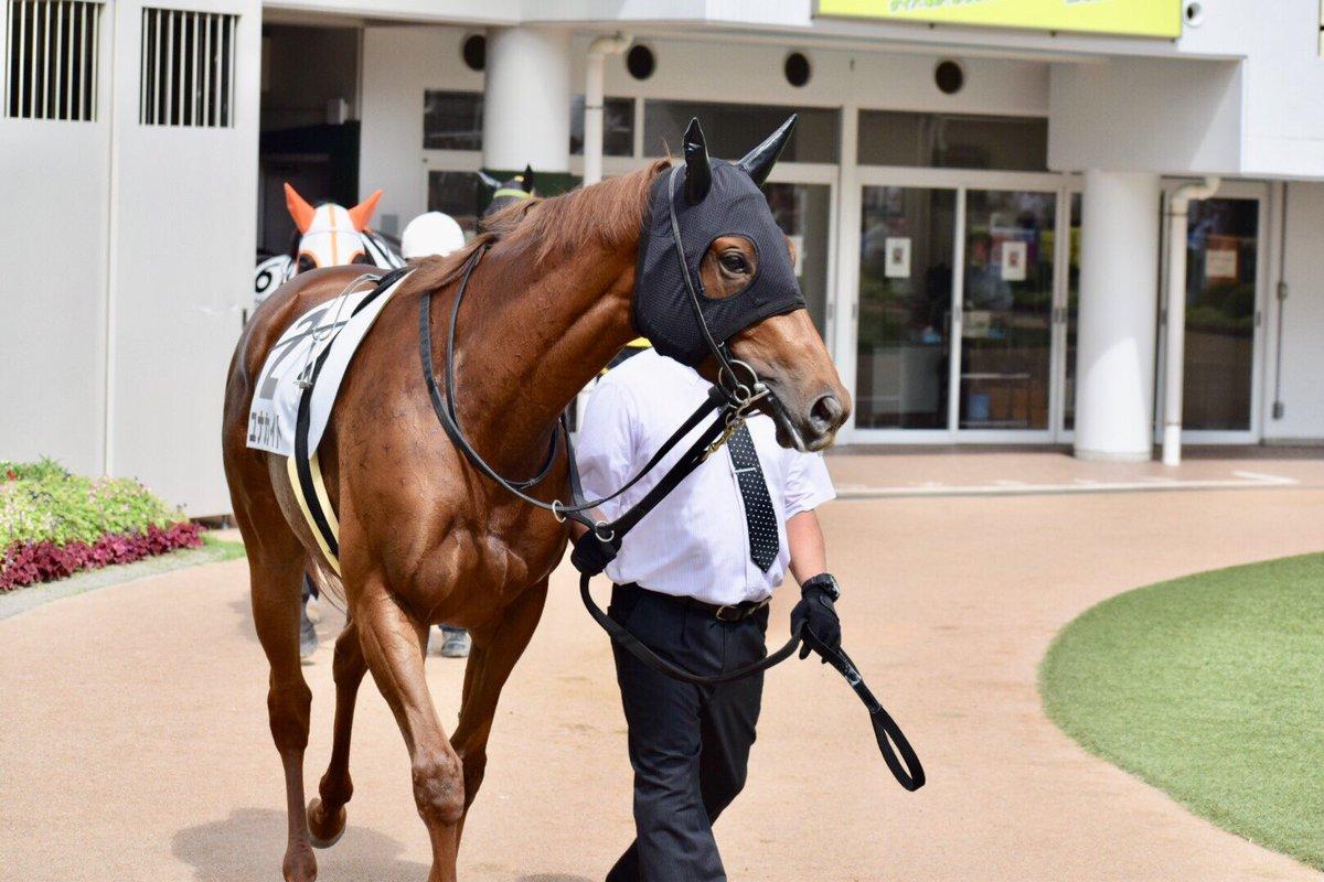 2019.9.22 中山7R #ユナカイト 前走新潟では惜しいレースでしたが、今日は勝ってくれました🤣🤣🤣強かったー😍💕 関係者の皆さま、おめでとうございます🎉🎉🎉 #木村厩舎 #ミルコ・デムーロ 騎手