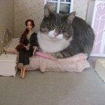 ドールハウスに侵入してきた猫がかわいすぎる!!