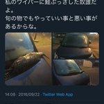 こんないたずらは初めて?車のワイパーに旬の鮭を刺された人!