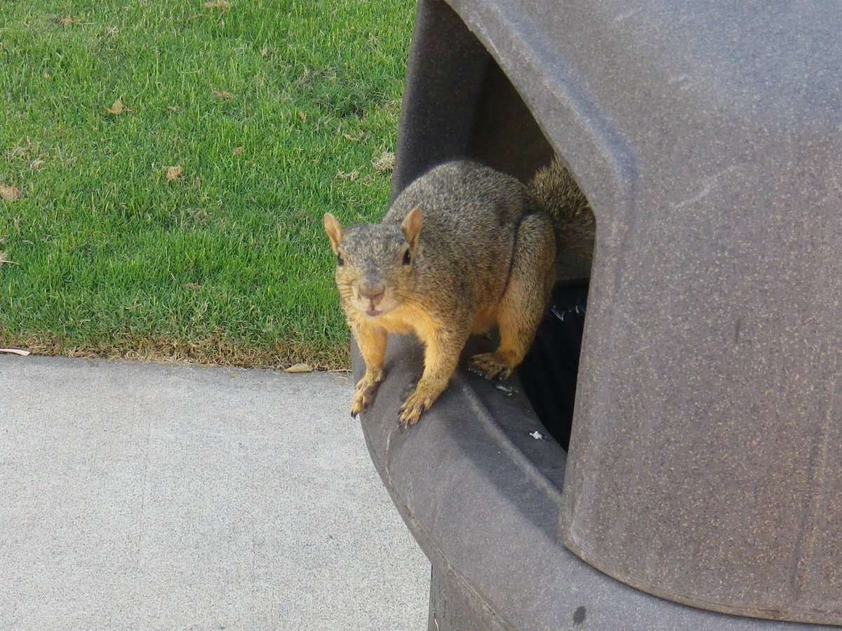 Picture taken September 23, 2013, 6 years ago today, at OCC.  I invite you to check out my @YouTube playlist if you want: https://www.youtube.com/playlist?list=PLknwc-b5lwwCtwQakg6LjlO7jRCxhusjo …  #Naturescapes #Squirrel #Squirrels #Nature #bestoftheday #naturewalk #naturegram #naturelove #naturephoto #beautifullife #btfyp
