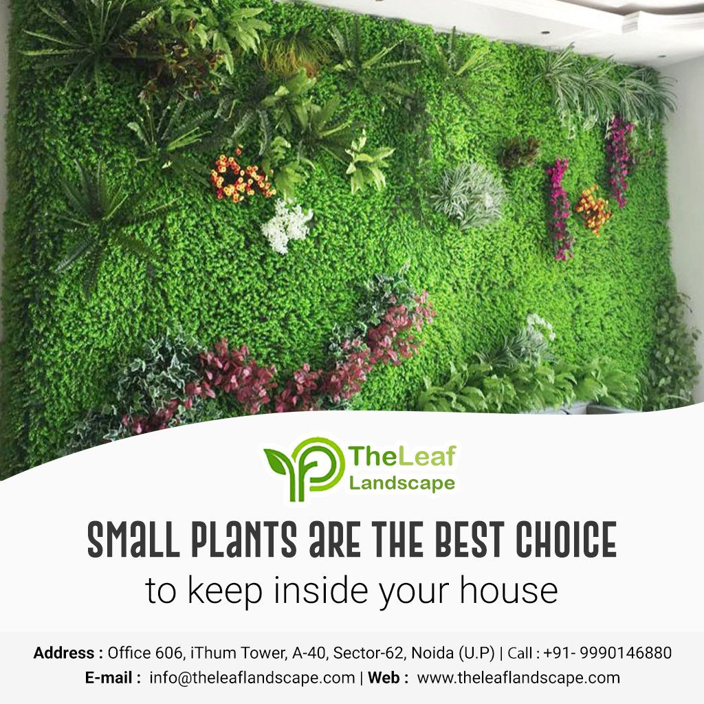 Small plant are the best choice to keep inside your house.  #smallplant #VerticalGardening #PlantDesign #GardenFun #Environment #ApartmentGarden #creativeverticalgarden #WallsPlant #GreenWalls #homegarden #Plant #greenhouse #greenhome #verticalgarden #freshair #Nature #Greenery