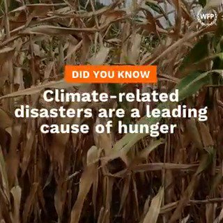 #ClimateChange is disrupting the way that we produce, process, transport and consume food. 🌱🌀🛩️🥘  On Monday, follow 👉 @FoodSystems to learn more about how strengthening global #foodsystems can help make the world more resilient to climate shocks. 🌎 #UNFSS2021