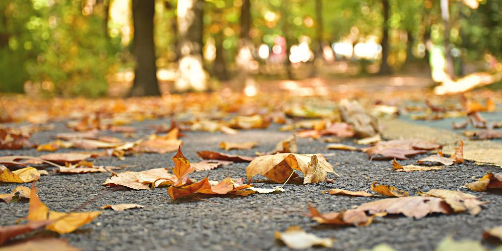 Happy first day of Fall! We're ready for changing seasons, crisp, air and pumpkin everything. Fall leaves are gorgeous, but as they fall they can make streets slippery and block traffic lines or potholes. Stay safe out there! https://t.co/60vJNg2Wgk
