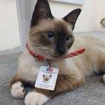 猫がブラジルで弁護士会の職員として採用された!?