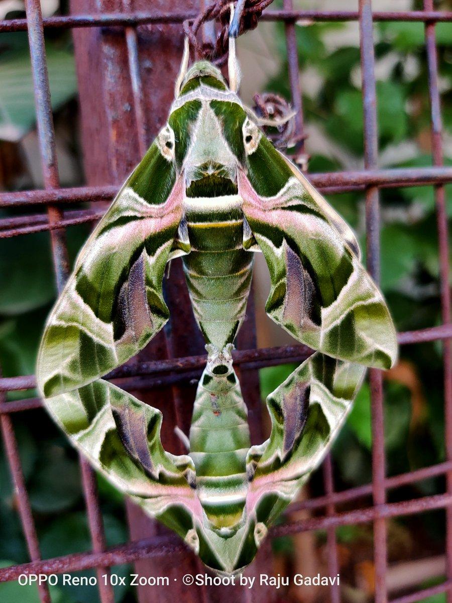 @oppomobileindia @oppo insect #amature #photography #PhotoOfTheDay