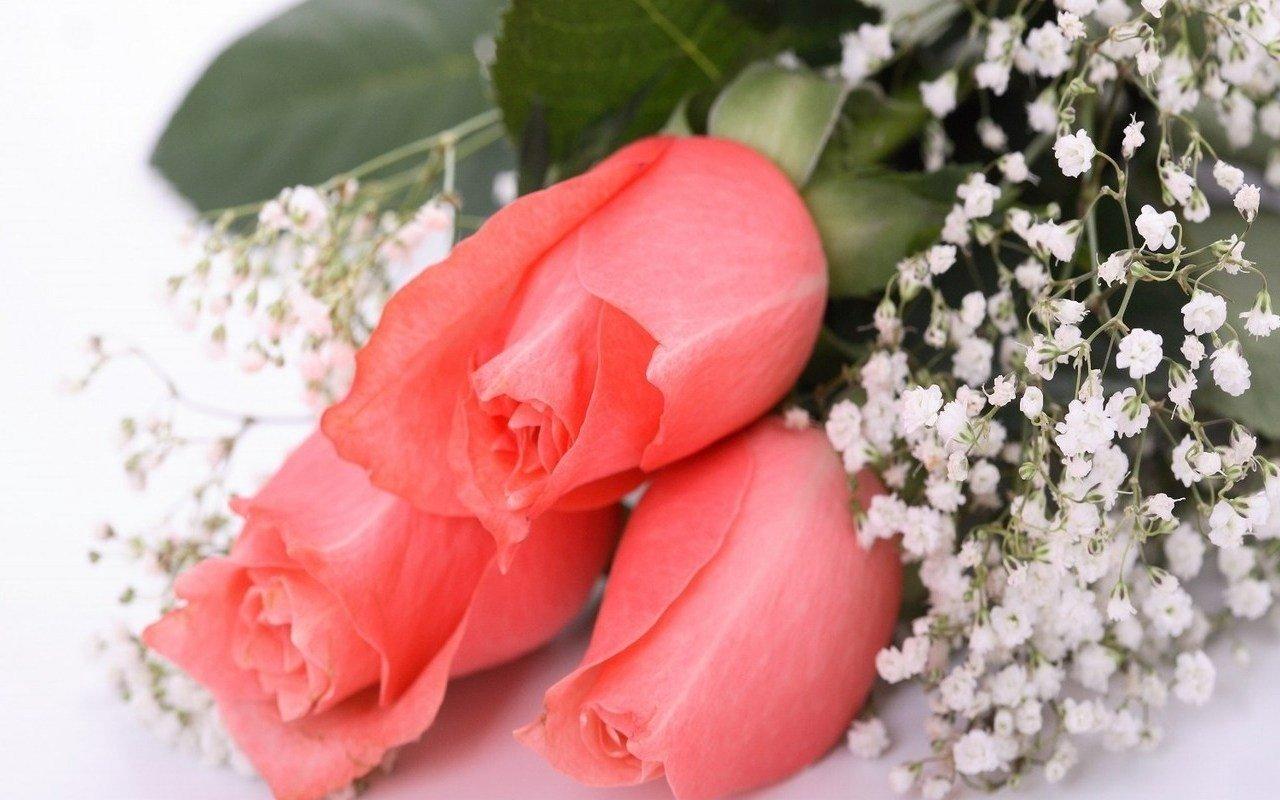 Красивые открытки с розами самой красивой девушке