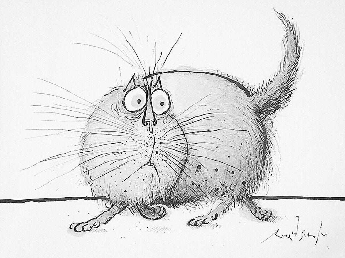 Смешные рисунки карандашом кошек