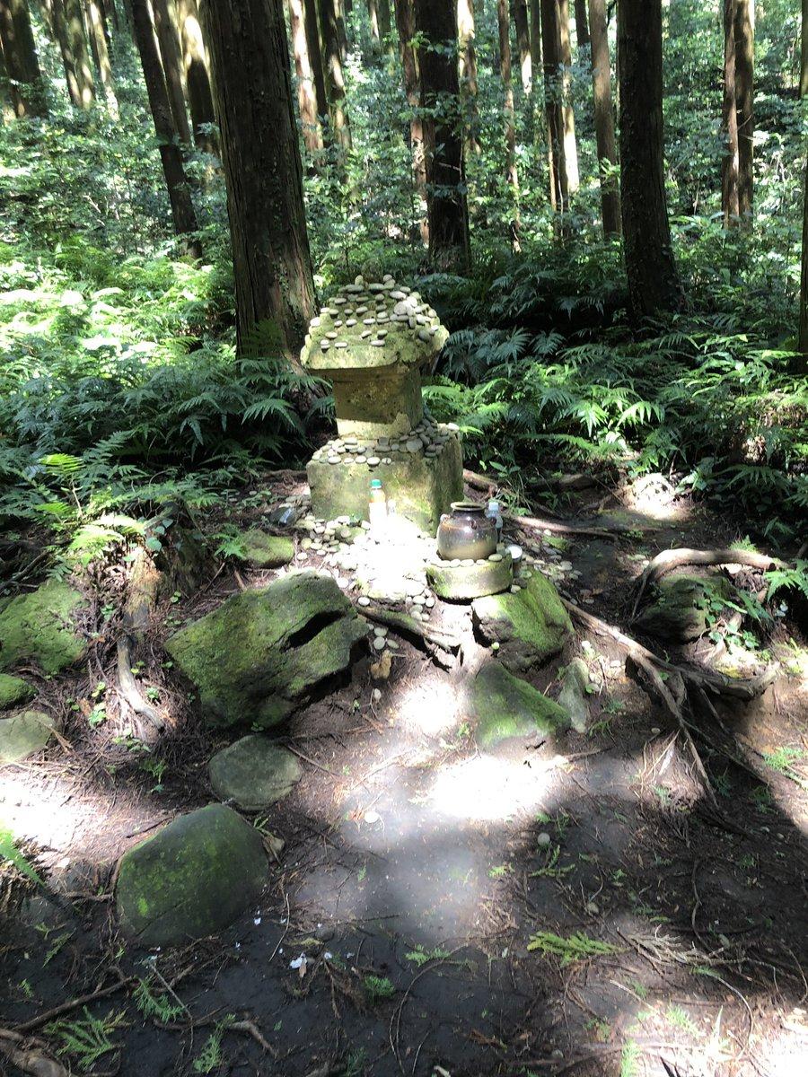 真田幸村のお墓。桜島?開聞岳⛰霧島神宮の樹齢800年のメアサ杉?