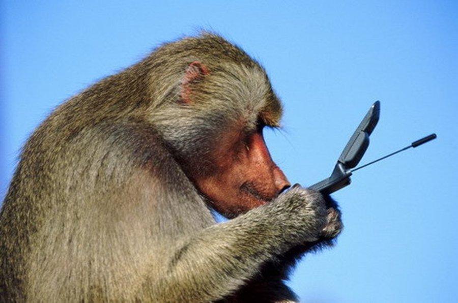 картинка мартышка с телефоном