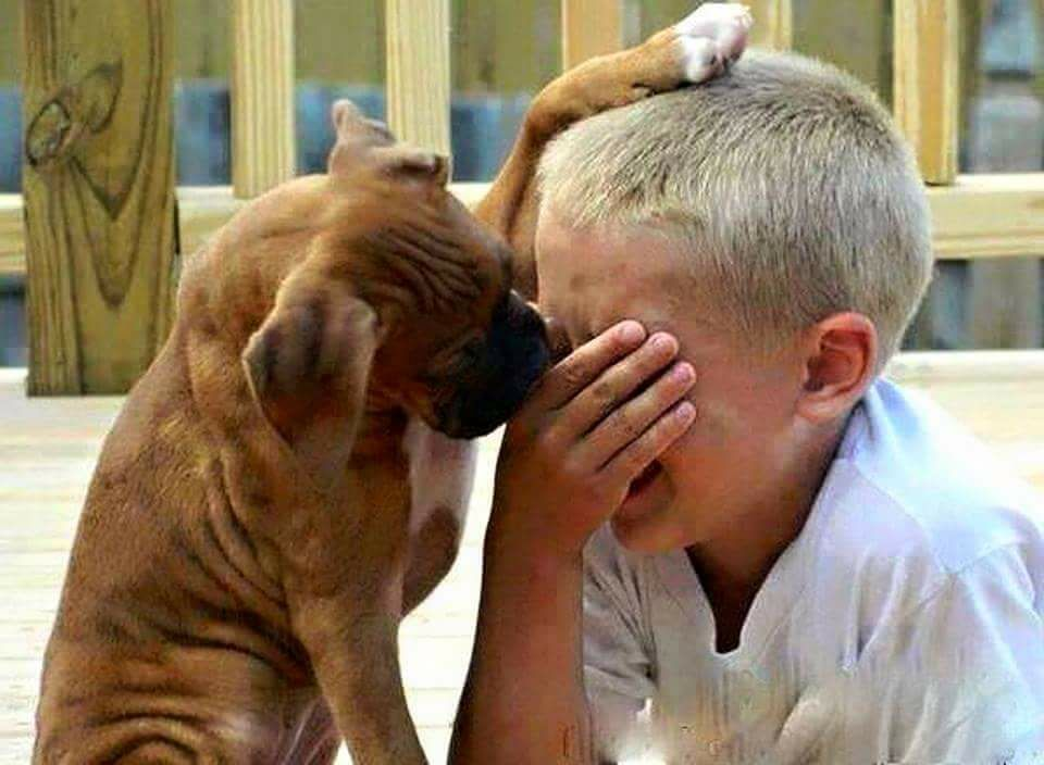 Смешные картинки не плач