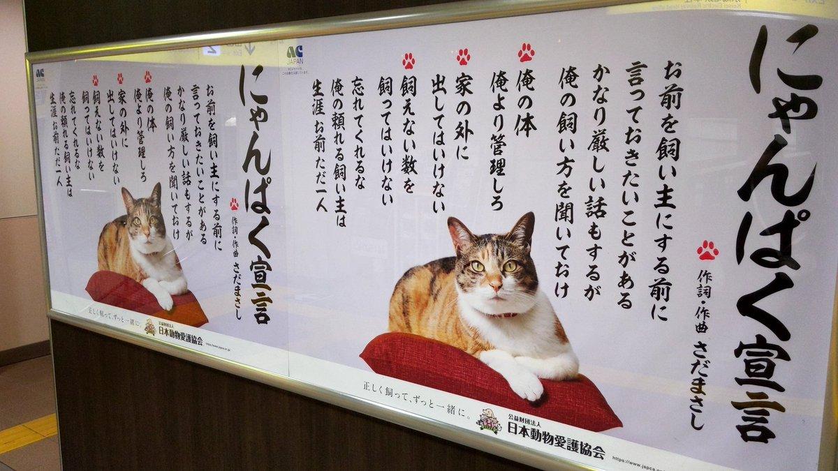 猫 宣言 にゃん ぱく